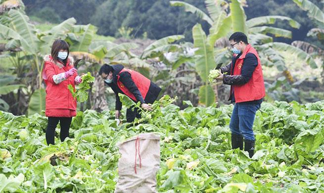 Volunteers help locals in need amid novel coronavirus fight