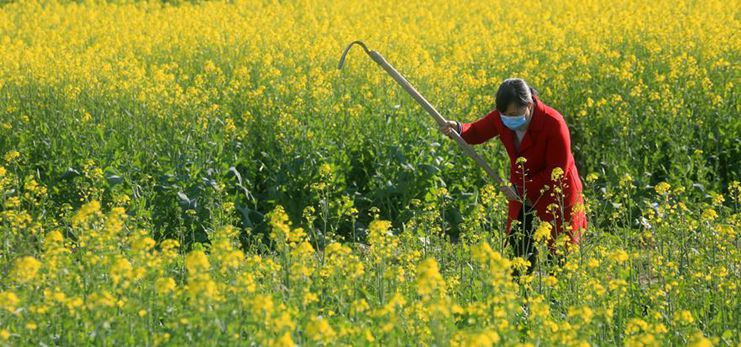 Farmers across China carry out agricultural production as weather warms up