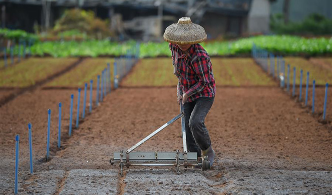 Spring farming in Haikou, S China