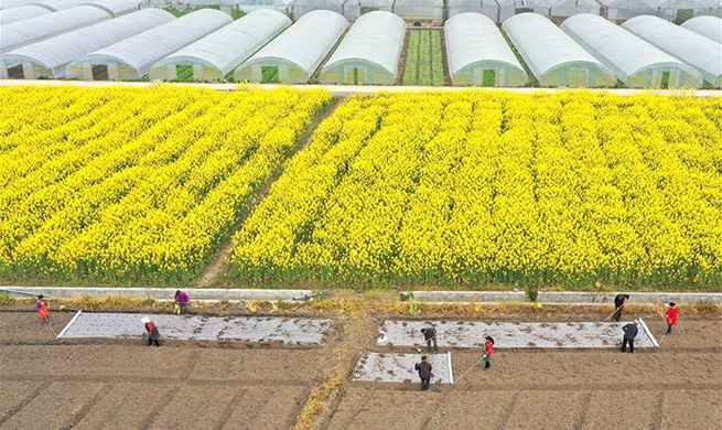 Spring ploughing underway in many areas of China amid COVID-19 fight
