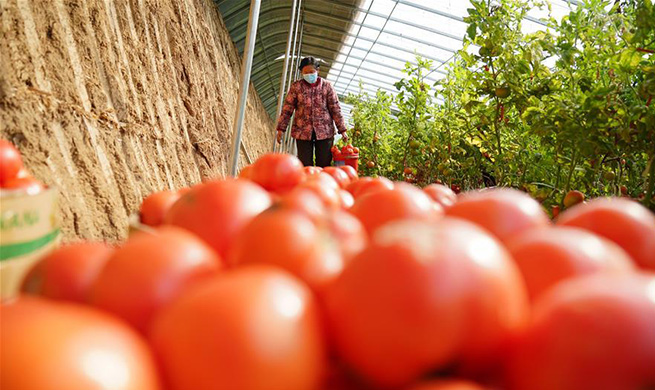 Farmers in Hebei busy with farming under strict epidemic prevention and control measures