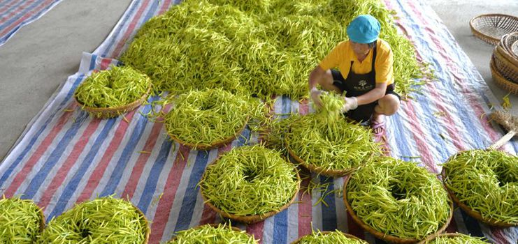 In pics: daylily products in Hengyang, C China