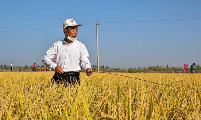 Public yield monitoring conducted in saline soil rice paddies in Xinjiang