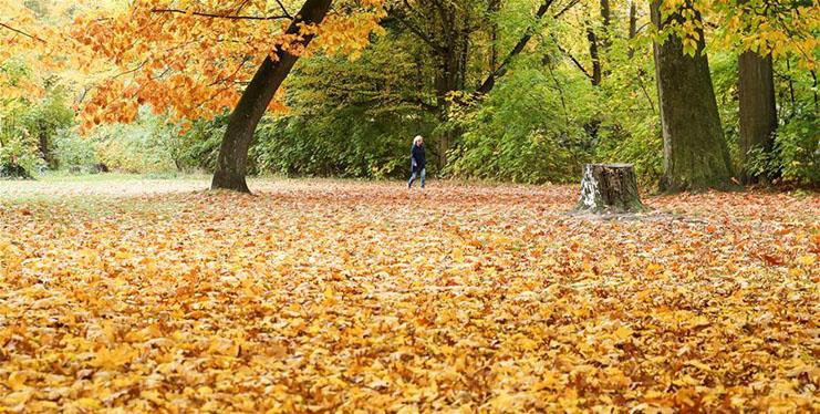 Autumn scenery in Berlin