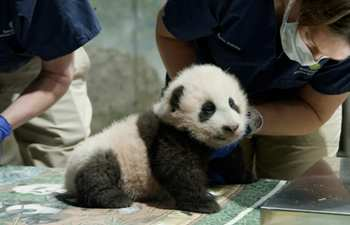 Giant panda cub in U.S. zoo gets name