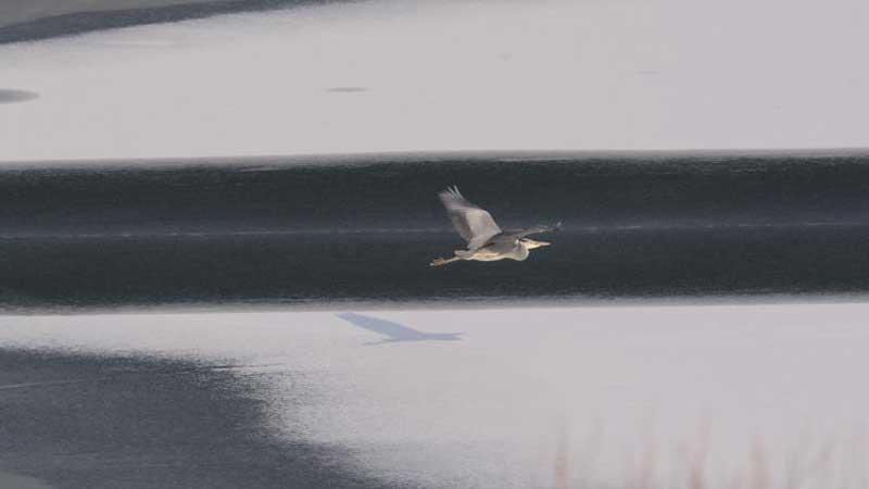 Birds seen in Beijing Garden Expo Park
