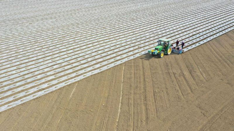 Cotton spring sowing kicks off from irrigation areas in Xinjiang