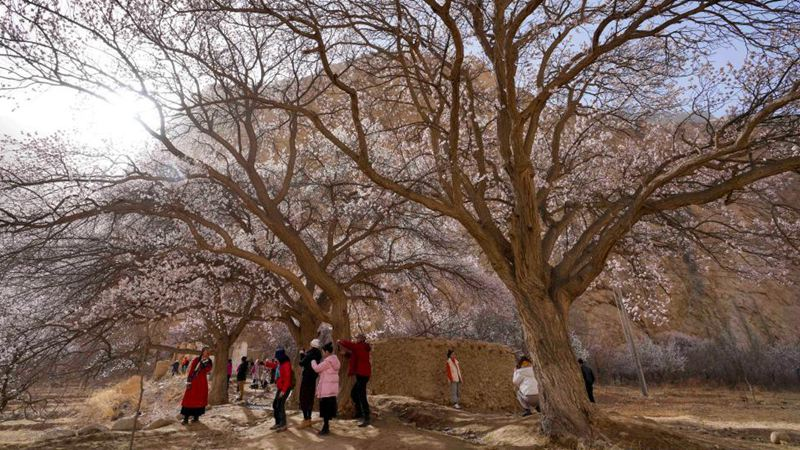 Tourism improves local villagers' lives in Xinjiang