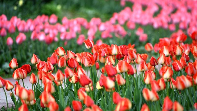 29th spring flower show kicks off at Xi'an Botanical Garden