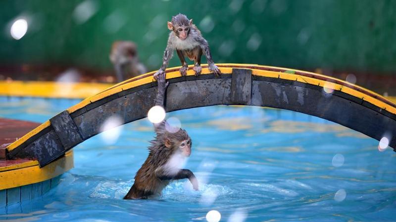Macaques have fun at Nanwan Monkey Islet in Hainan