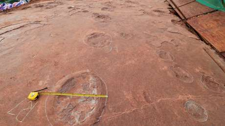 """""""Dinosaur dance floor"""" discovered in east China's Fujian"""