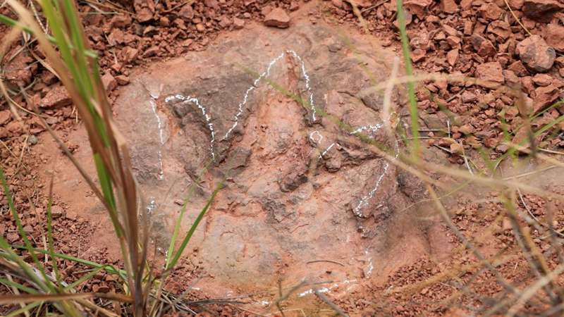 Newly-found dinosaur footprints seen at excavation site in SE China