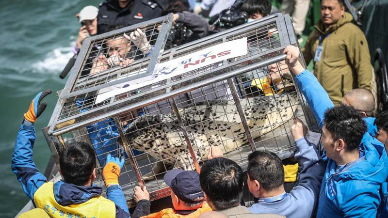 Eight spotted seals released into sea in Dalian