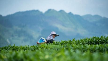 Solar term Guyu marked in China
