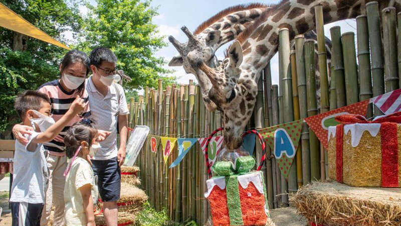 World Giraffe Day celebrated in Yongin, South Korea