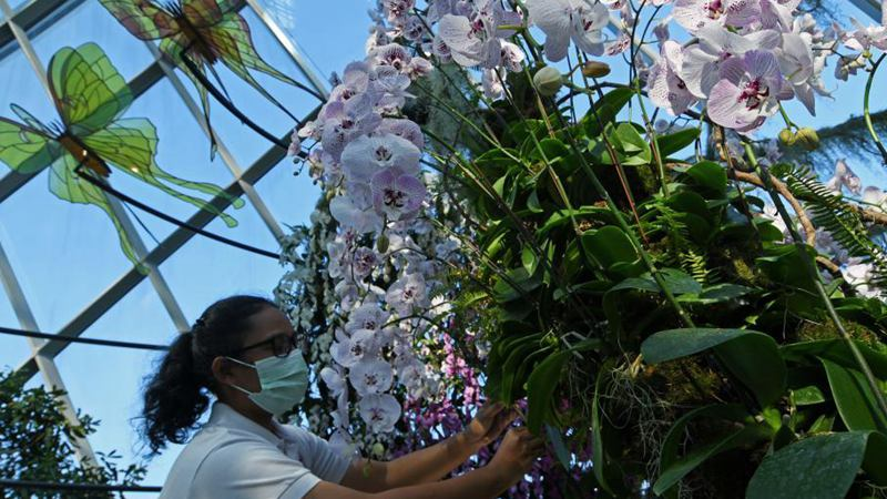 """""""Orchid Haven"""" exhibition held in Singapore"""