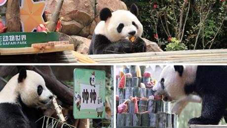 World's only surviving panda triplets turn 7