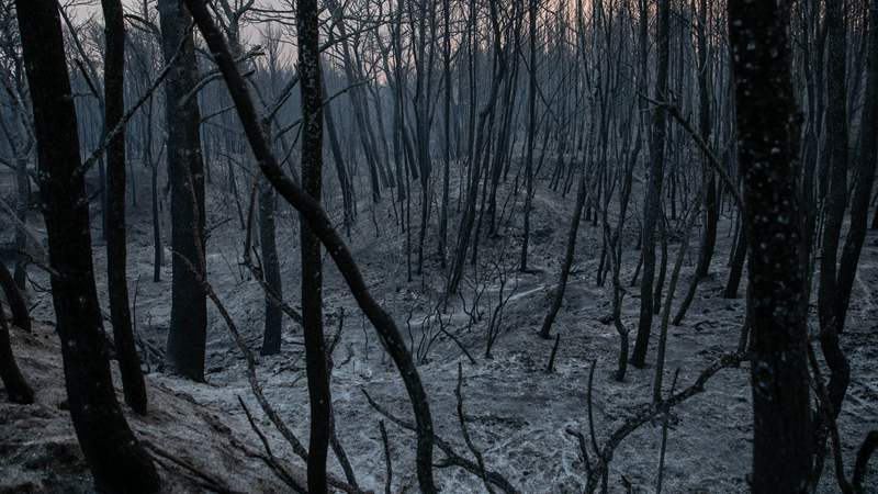Wildfire continues to rage near Athens, dozens of houses damaged