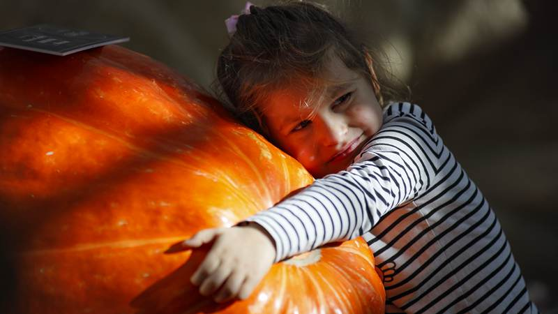 Annual giant pumpkin exhibition held in Moscow