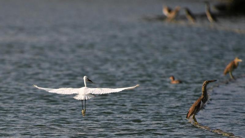 In pics: birds over Nanhu Lake in Nanning, Guangxi