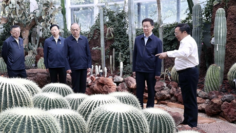 Chinese vice premier calls for green development, ecological civilization