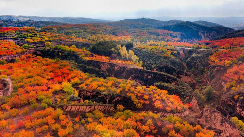 Autumn scenery of Yulin City in Shaanxi