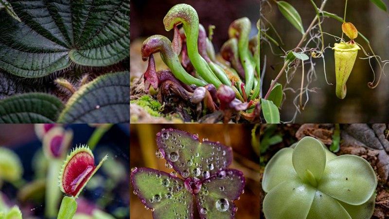 In pics: Kunming Botanical Garden
