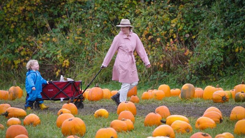 Pumpkin patch activity held in Richmond, Canada