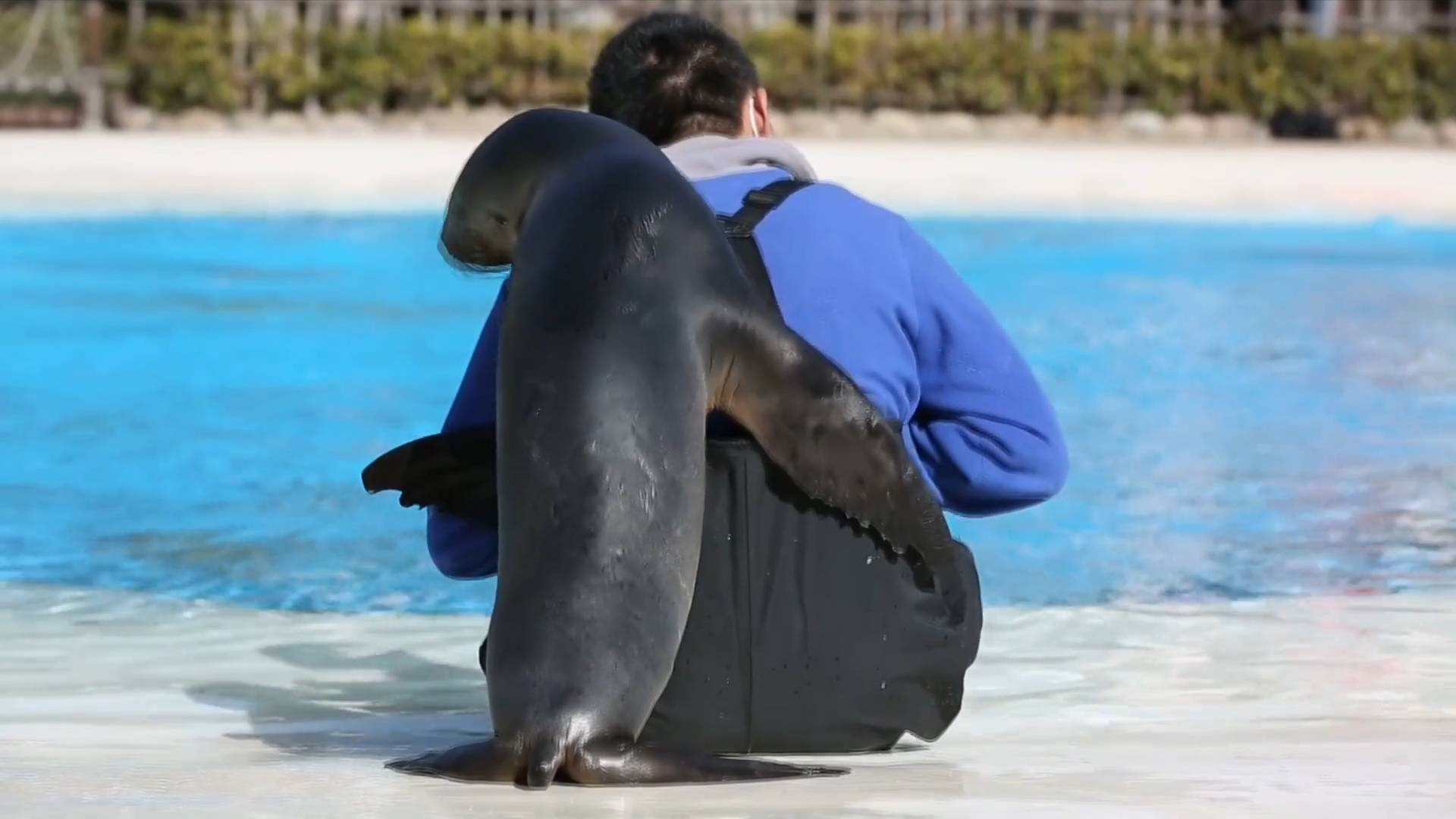 GLOBALink | A Chinese keeper's Father's Day with his sea lion daughter