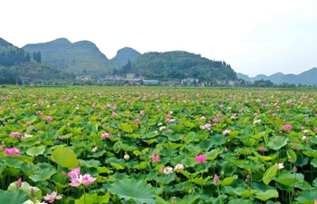 View of lotus flowers