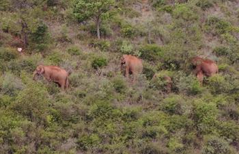 China's migrating elephant herd travels southwards
