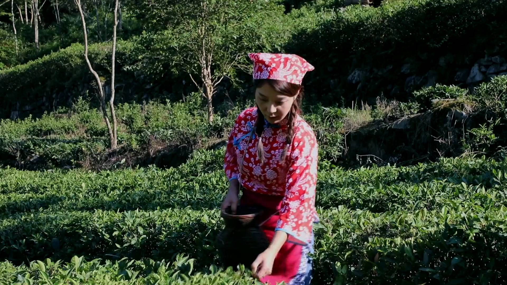 GLOBALink | Tea industry goes smart with 5G technology in NW China's Longnan