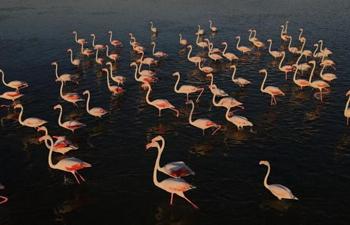 In pics: flamingos in Mogan Lake in Turkey