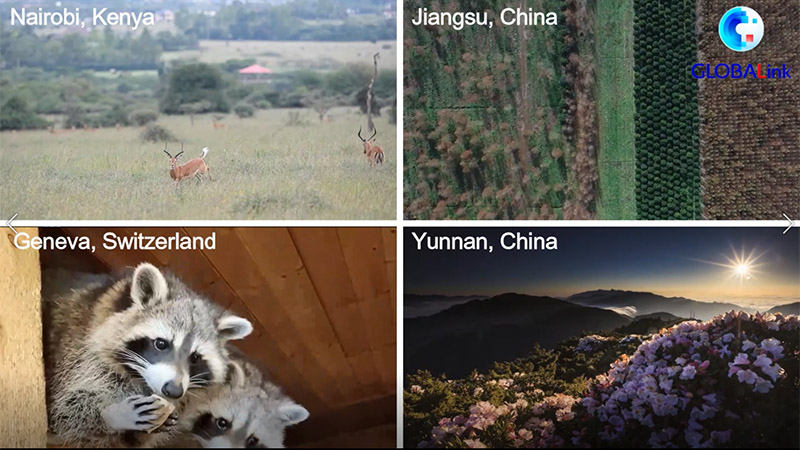 GLOBALink   How national parks around the world protect biodiversity?
