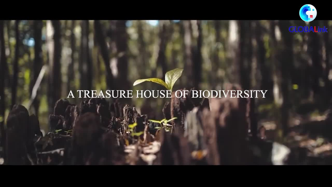 "GLOBALink   ""Nature Guardian"" protects Chile's Nahuelbuta mountain range"