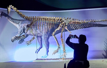Skeleton of 210-million-year-old plateosaurus exhibited at Natural History Museum in Vienna