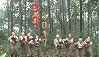 8 giant panda cubs born in 2016 send New Year greetings together