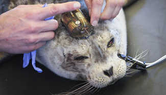 New marine mammal hospital facility in full operation in Canada