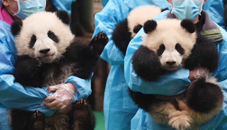 23 panda cubs send New Year greetings