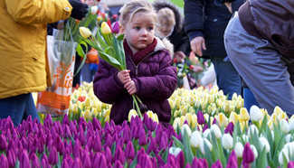 Dutch National Tulip Day held in Amsterdam