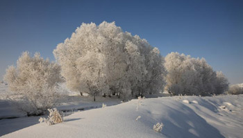 Rime scenery near Kiran River in Altay, NW China's Xinjiang