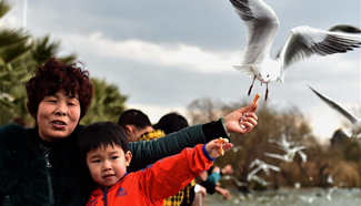 Tourists feed black-headed gulls in SW China's Yunnan
