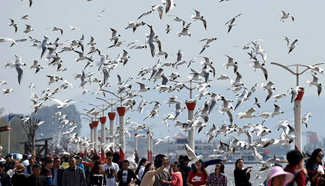 Black-headed gulls seen in southwest China's Kunming