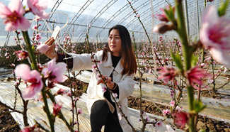 Visitors enjoy peach blossoms in Hebei
