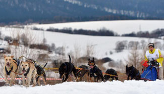 Dog sled races held in Poland
