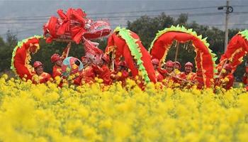 Dragon dance performed amid rape flowers in SW China's Guizhou