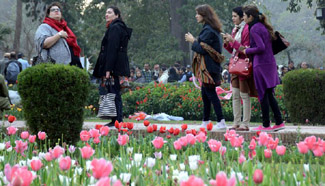 Tulip flowers bloom at park in E Pakistan's Lahore