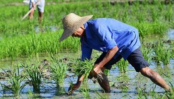 Hainan farmers plow in field during spring plowing season