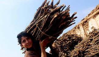 Firewood demand increases in Pakistan