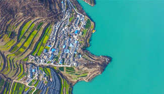 Aerial photos of cole flower fields in NW China